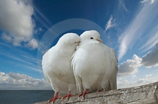 the holy spirit2